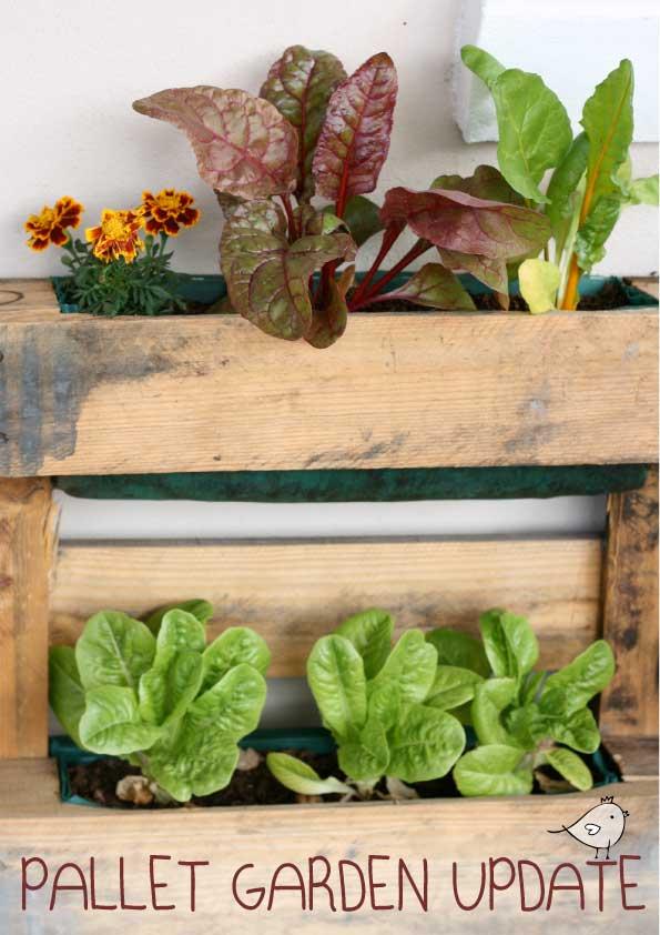 Vertical Pallet garden update