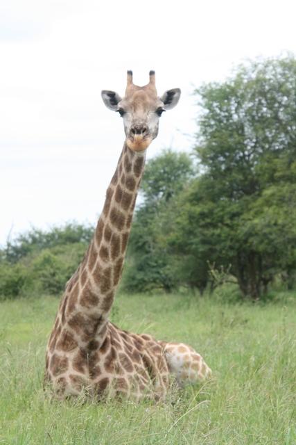 First giraffe spotting