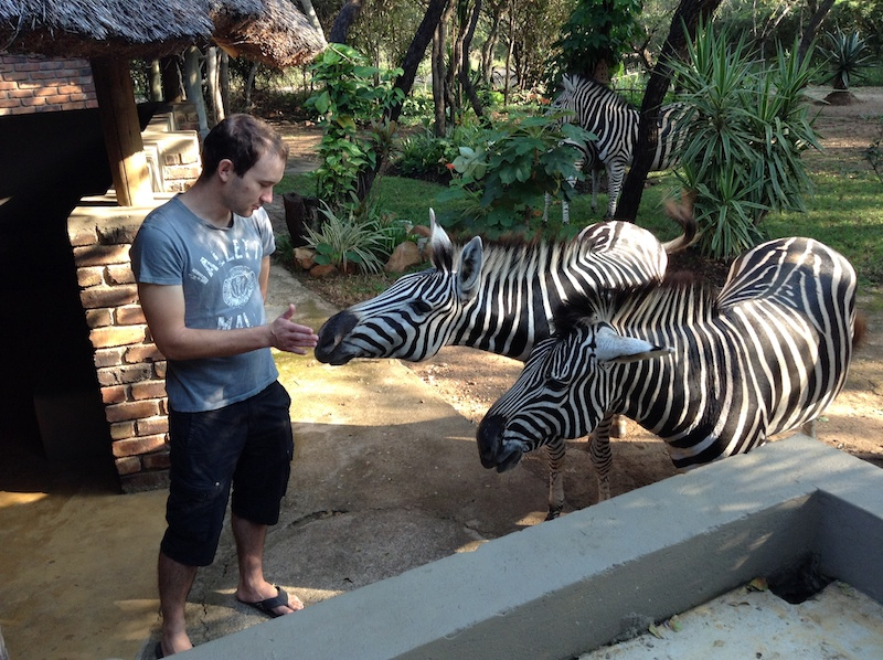 Feeding giraffe