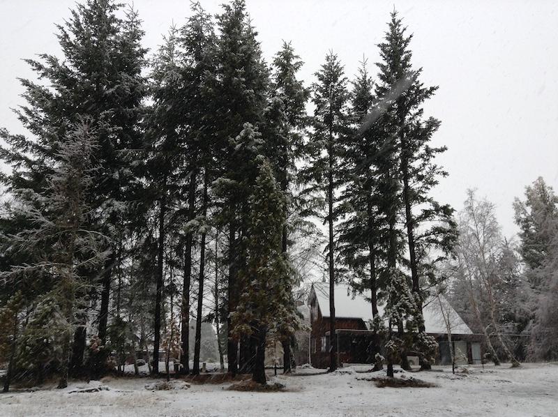 Snow | Pure Sweet Joy