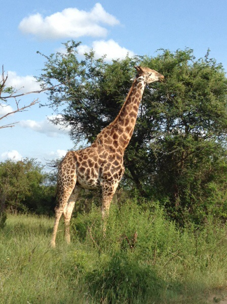 A weekend in Nelspruit and a drive through Kruger // hospital life