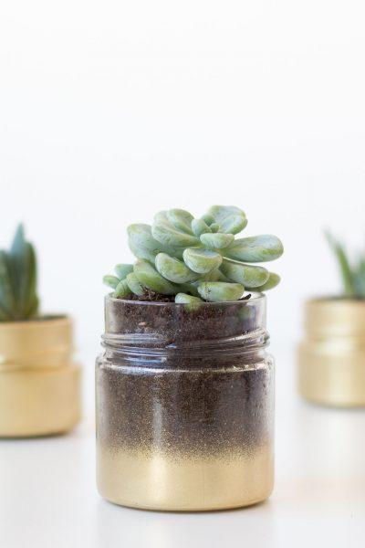 Gold glass succulent jars // DIY